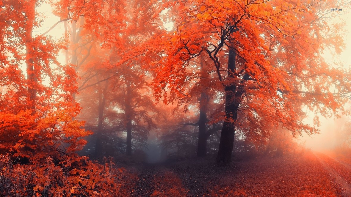 17362-misty-autumn-morning-1920x1080-nature-wallpaper